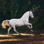 Horseplay as Therapy